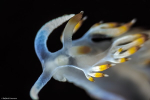 &quot;From the Top&quot; 